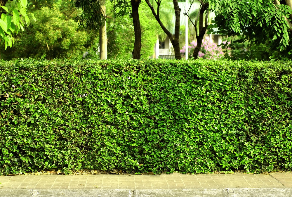 Is your neighbour's hedge blocking your views/sunlight?