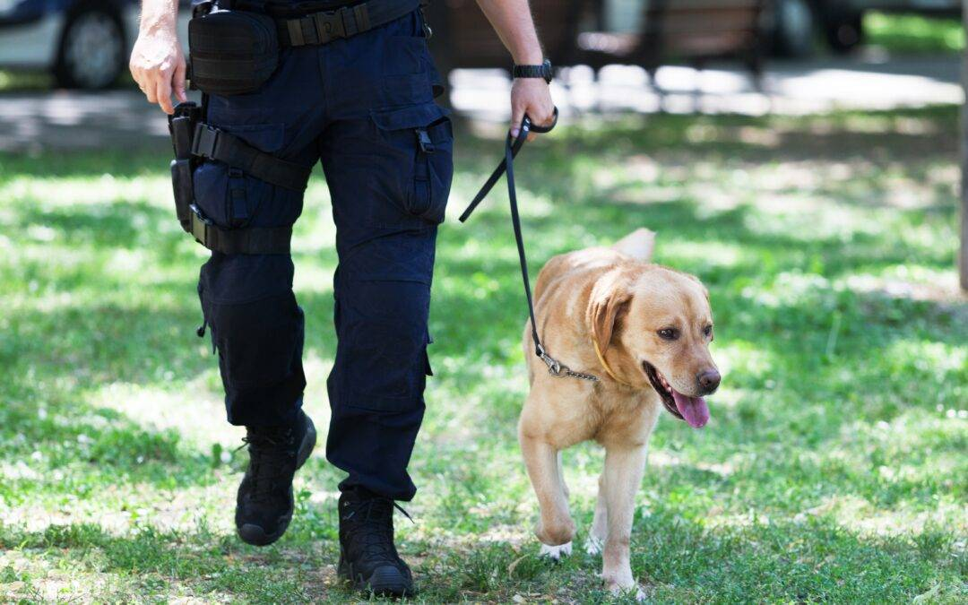 Helpful tips when dealing with police sniffer dogs