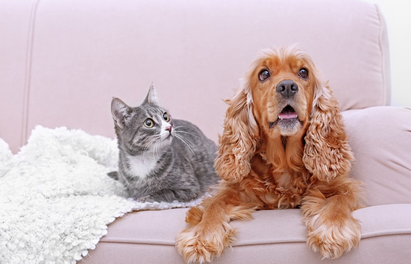 Living in strata with an animal: a win for your furbaby!